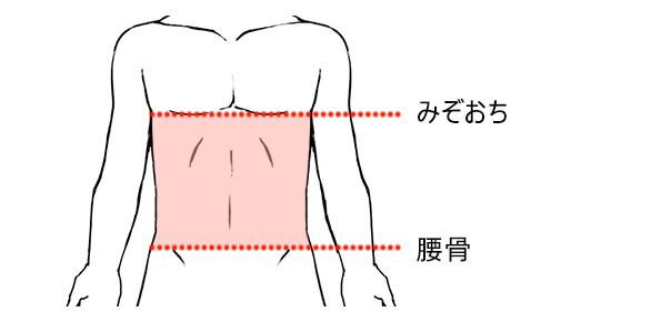 腹毛の脱毛範囲