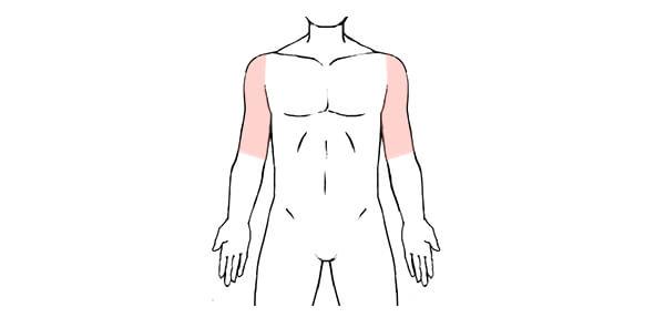上腕の脱毛範囲の画像