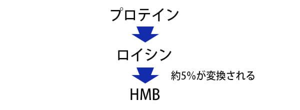 HMB生成の流れ