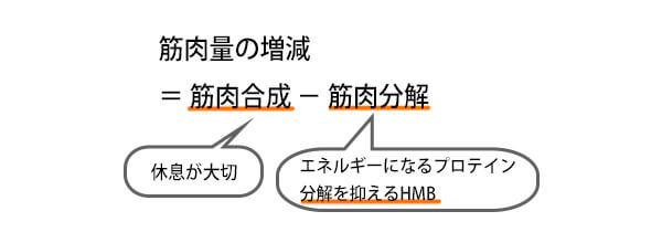 HMBと筋トレの関係