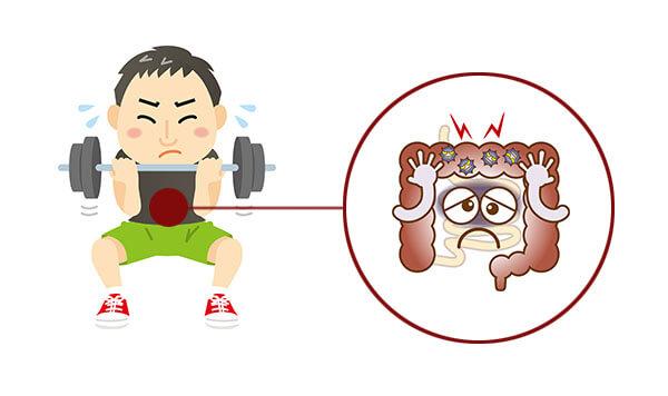 腸と筋トレとの関係