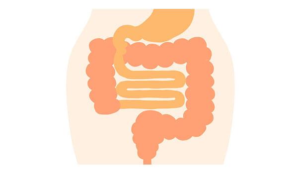 腸の役割と大切さ